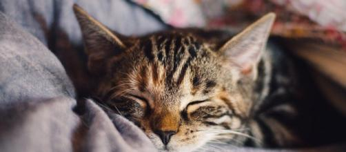 Quels sont les avantages de domir avec son chat ? - Photo pixabay