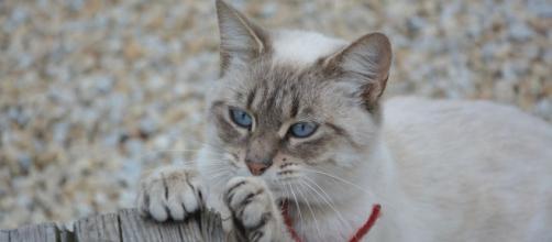Pourquoi mon chat attaque mes chevilles ? - Photo Pixabay