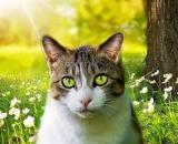Pourquoi mon chat me marche dessus ? - Photo Pixabay