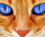 Quels sont les avantages de vivre avec un chat ? Photo Pixabay