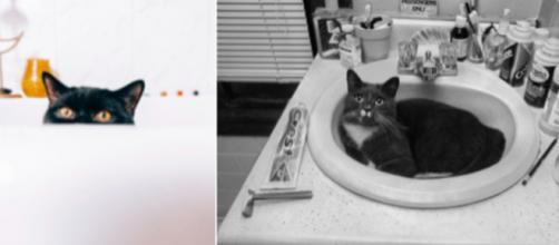 Pourquoi mon chat me suit dans la salle de bain ? Photo capture d'écrans images Pexel (Libre de droit)