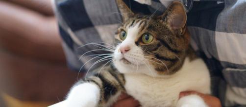 Pourquoi mon chat vient toujours sur mon ordinateur ? - Photo Pixabay