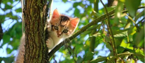 Pourquoi mon chat me rapporter des proies ? - Pexel