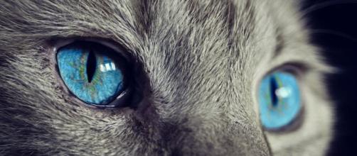 Pourquoi mon chat n'aime pas tous les humains ? Photo Pixabay