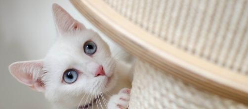 Comment aider votre chat à utiliser son griffoir ? - Photo Pixabay
