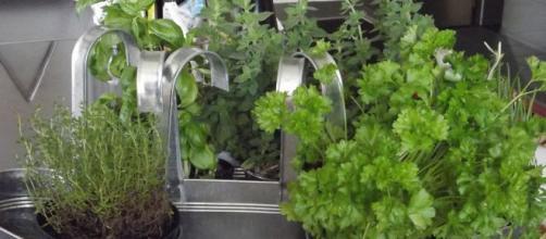 Las hierbas son un gran condimento en la cocina