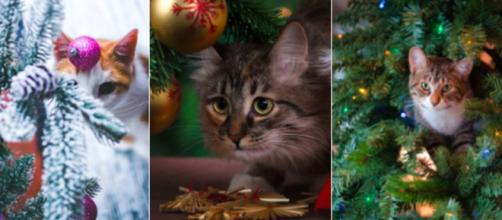 Chat : comment faire pour protéger le sapin de Noël - Photo montage via Pexel