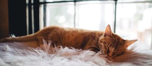 Los gatos son extraordinarias mascotas que siempre hay que proteger durante el invierno.