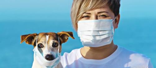 Los perros son excelente compañía para sobrellevar la pandemia del coronavirus
