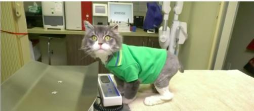 Un chat a été sauvé de la mort par une association - Photo capture d'écran vidéo