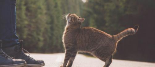 Un chat en provenance de Russie est arrivé au Royaume-Uni - ©capture d'écran Pexel