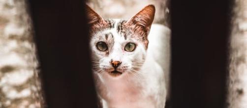 Un chat rentre chez lui après 536 jours d'absence - Photo Pexels