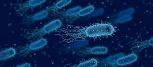 La nueva cepa del virus ya está en varios países de Europa