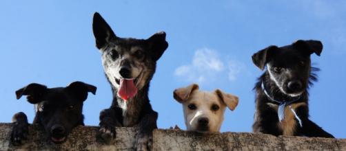 Vers de nouvelles mesures contre les abandons d'animaux - Photo Pexel