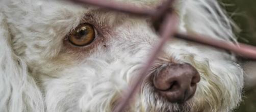 Chaque année, 100.000 chiens et chats sont abandonnés selon la SPA - Source : image d'illustration, Pixabay