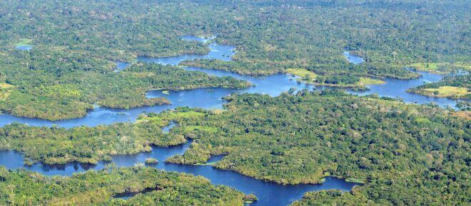 Não estamos longe de atingir um ponto de não retorno na Amazônia, diz Carlos Nobre