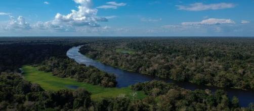 La forêt amazonienne dans l'état brésilien de l'Amazonas