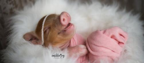 O ensaio de bebê leitoa viralizou na web. (Arquivo Blasting News)
