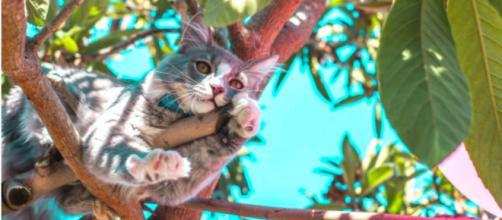 Un chat coincé dans un arbre depuis des jours appelle à l'aide depuis 4 jours. -©Pexel