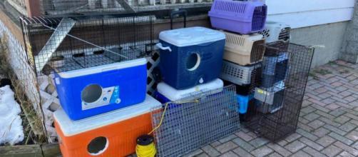 Chats : cette association vient en aide aux animaux errants avec des glacières - ©Facebook BarnBuddiesOttawa