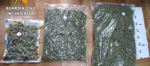 Guardia Civil enfrenta red de cultivo de marihuana ... - encastillalamancha.es