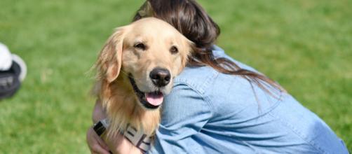 Dono de cão atingido por um tumor no coração demonstra gratidão aos que curaram seu pet. (Arquivo Blasting News)