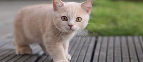 Los gatos son las mascotas más consentidas en muchos hogares en el mundo.