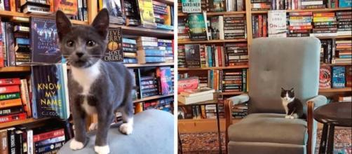 Chat et si vous en adoptiez un dans une librairie