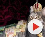 Chat trouvé dans les égoûts devenu riche