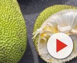 Jackfruit, una fruta que puede pesar 40 kilos