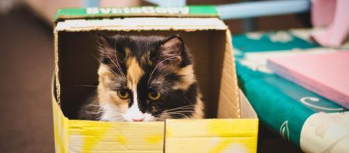 Chat aime le carton ce n'est pas pour son confort