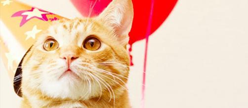 5 curiosità sulla Festa del Gatto: la data, 17 febbraio, scelta dai lettori di Tuttogatto