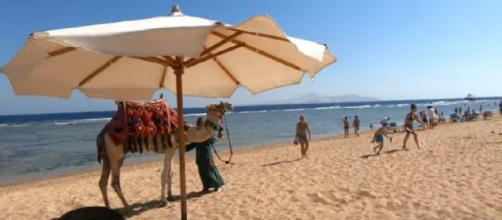 Amazing Sharm El-Sheikh beach and tourists. [Image source/settime2588 YouTube video]