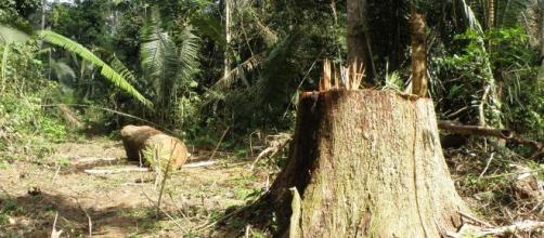 Governadores solicitam maior flexibilidade na exploração da mata nativa com a finalidade de incentivar a economia rural. (Arquivo Blasting News)