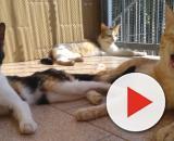 I Gatti, percettori delle condizioni meteorologiche