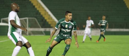 Palmerias x Guarani, Dudu perto dos 300 jogos. (Arquivo Blasting News)