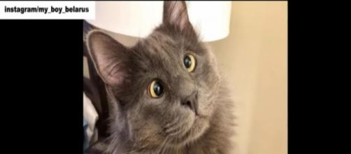 Cross-eyed kitty named Belarus is stealing everyone's hearts. [Image Source: Stories of Animals/YouTube]