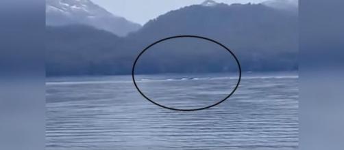 Misteriosa Criatura observado en Argentina, en el famoso lago Nahuel Huapi.