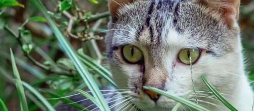 chat plusieurs raisons expliquent qu'il ne fait pas ses besoins dans sa litière