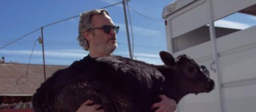 Joaquin Phoenix sauve une vache et son veau. Credit : YouTube Capture Farmsanctuary