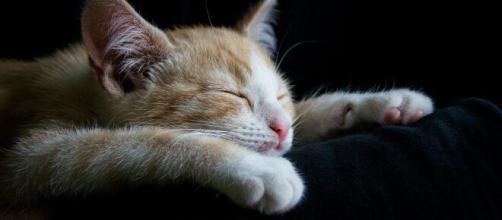 Chat : en fonction de comment il dort, la significaiton est différente