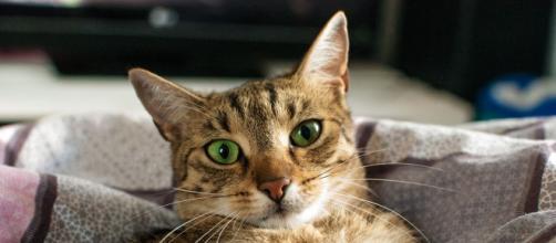 Le chat serait plus attaché à l'homme que le chien selon la science