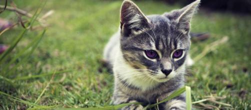 Ces signes qui montrent que votre chat vous aime