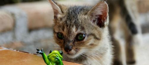Chat s'il fait tomber un objet ce n'est pas simplement parce que cela lui fait plaisir