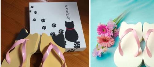 La tongue pour chat qui fait un carton venue du Japon