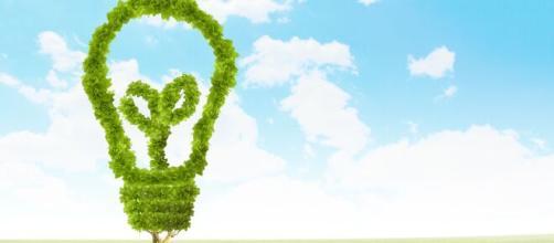 Motori di ricerca ecologici che tutelano l'ambiente