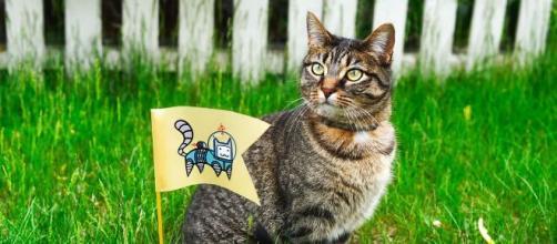 Un chat candidat pour les élections municipales de Rennes