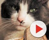 Comment faire pour que votre chat vous aime plus - Blasting News