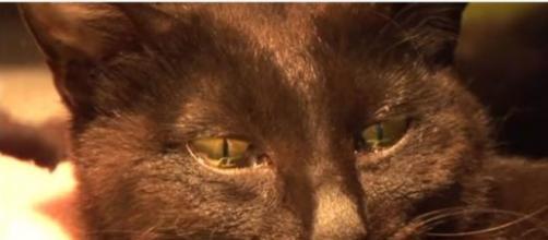 chat émue aux larmes après la perte de ses petits
