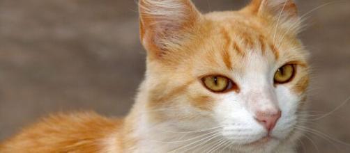 """Gatinhos mostraram preferência por músicas que apresentavam """"vocalização felina"""" de determinada frequência . (Arquivo Blasting News)"""